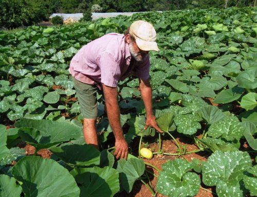 Se entregarán bienes para la producción hortícola
